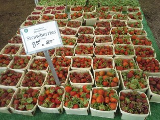 There was an *abundance* of strawberries at so many vendors