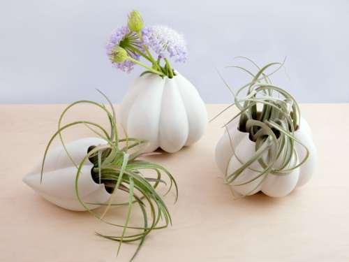 """Heirloom Seeds/Paydon & Silver Bell"" c/o Megumi Yoshida"