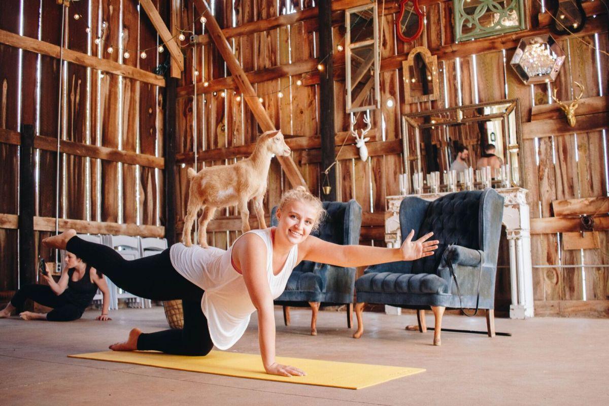 Goat yoga is a thing. Image via NY Goat Yoga