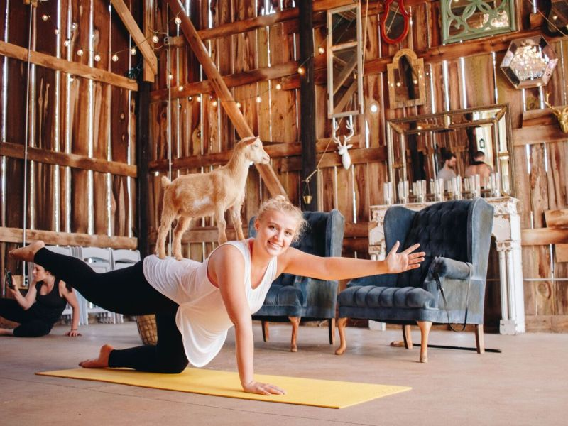 Goat yoga is a thing. Image via NY Goat Yoga