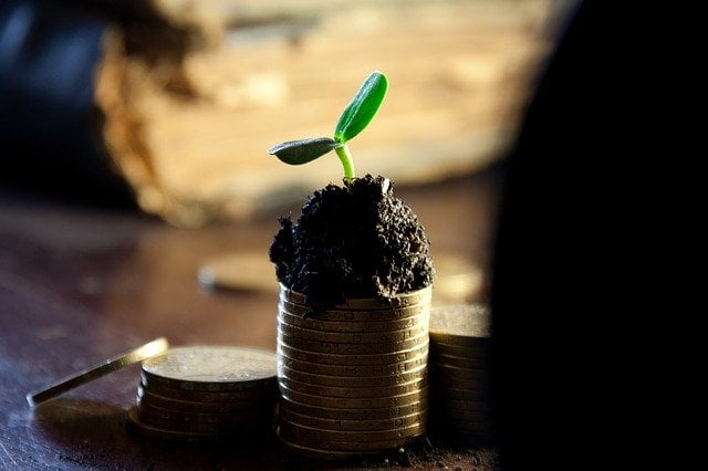 Plant Sprouting From Coin Stack