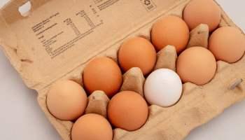 Egg Carton One White Egg