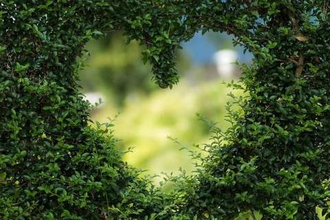 Heart Cut Out of Hedge