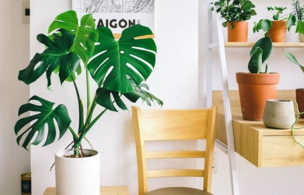 11 Low-Maintenance House Plants To Get This Spring