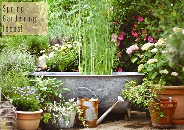 New Tips And Ideas for Spring Gardening