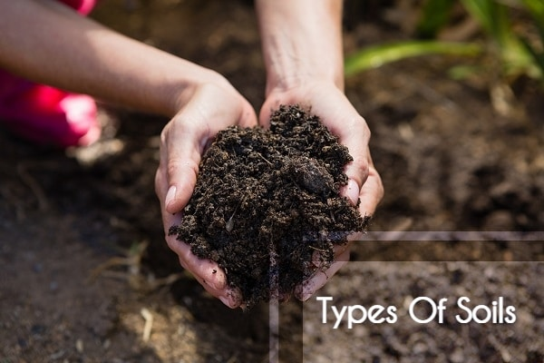 Popular Types Of Soil