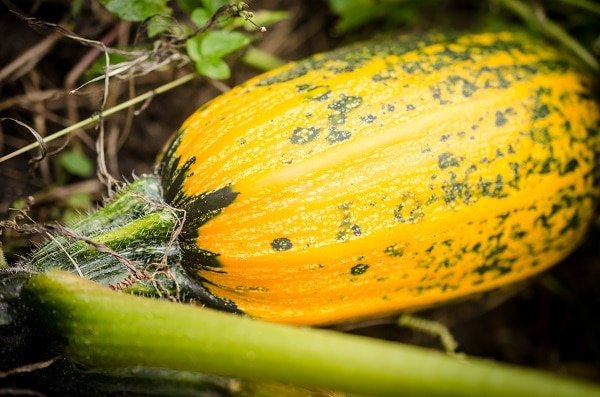 9 Best Vegetables To Grow During Fall