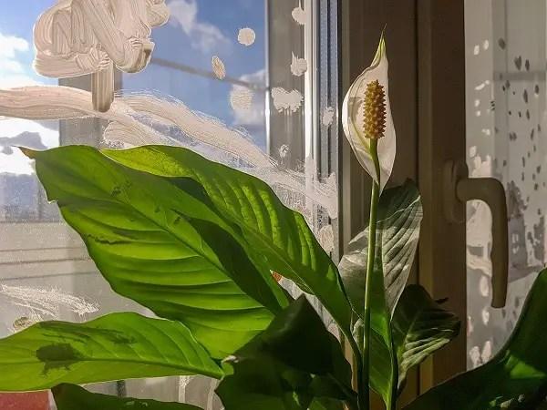 Plants That Can Survive Low Light