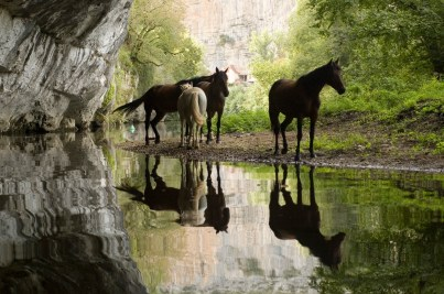 Horses on the Cele
