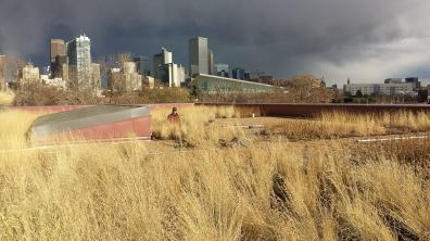 Community-College-Denver-1