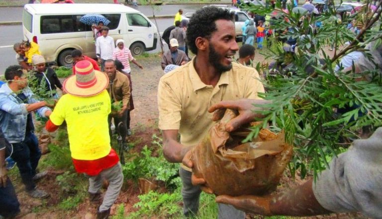 Planting for the planet: Green Scene supports national environmental initiative