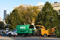 green-scene-tree-service-13