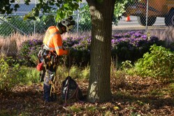 green-scene-tree-service-14