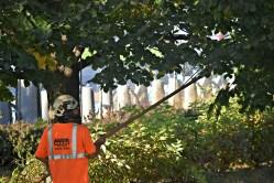 green-scene-tree-service-15