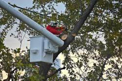 green-scene-tree-service-4