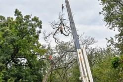 green-scene-tree-service-18
