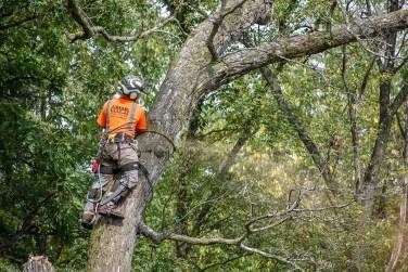 green-scene-tree-service-27