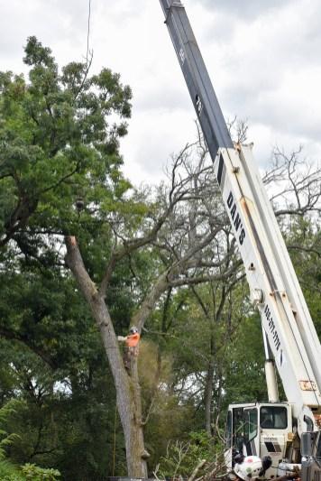 green-scene-tree-service-9