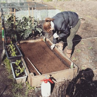 Sowing carrot 3