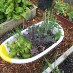 Baby bath container Serenity Community Garden