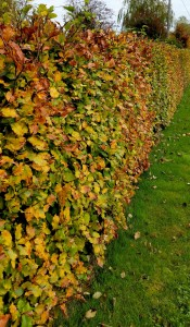 A Simple Guide to Planting a Hedging