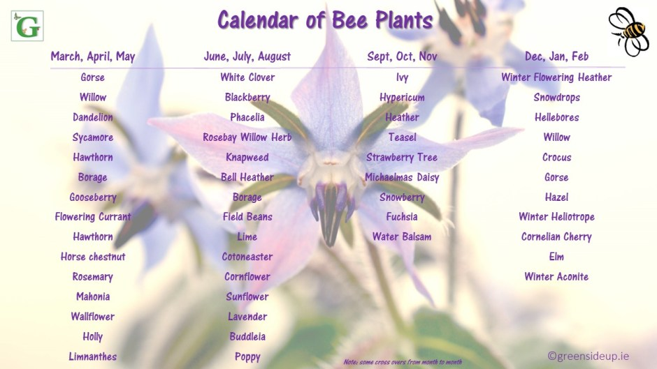 How We Can Help Bees and Pollinators in our Garden