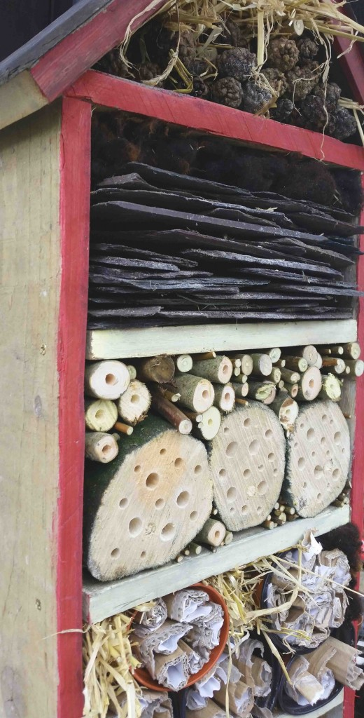 3 Reasons Why We Need To Build More Bug Hotels