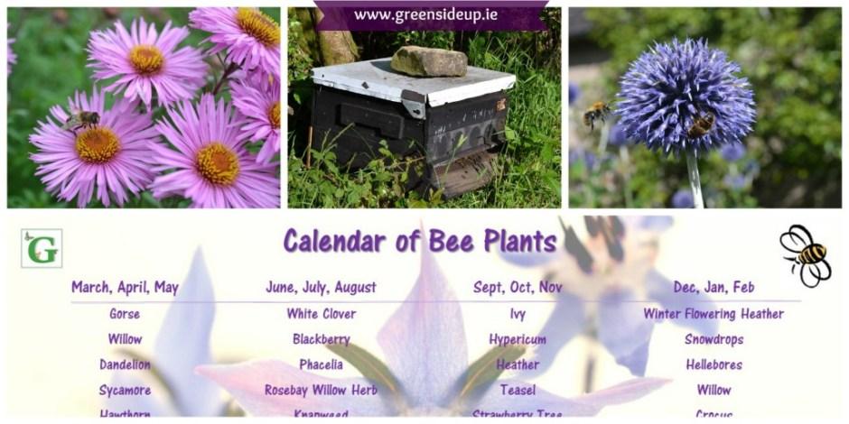Calendar of Bee Plants from www.greensideup.ie