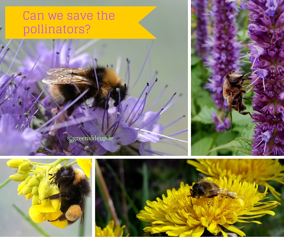 Can we save the pollinators
