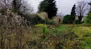 Carlow Community Garden Wild Area - An Gairdin Beo