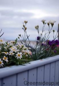 Flowers in Sligo