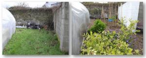 Goresbridge Community Garden - Blueberries & herbs before & after