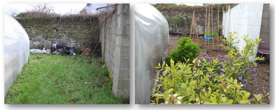 Goresbridge Community Garden - Blueberries & herbs before & after
