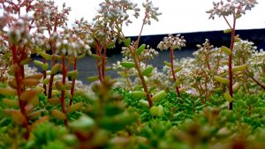 How to create a green roof structure