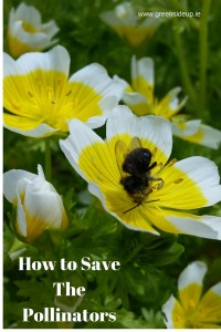 Can We Save the Pollinators of Ireland?