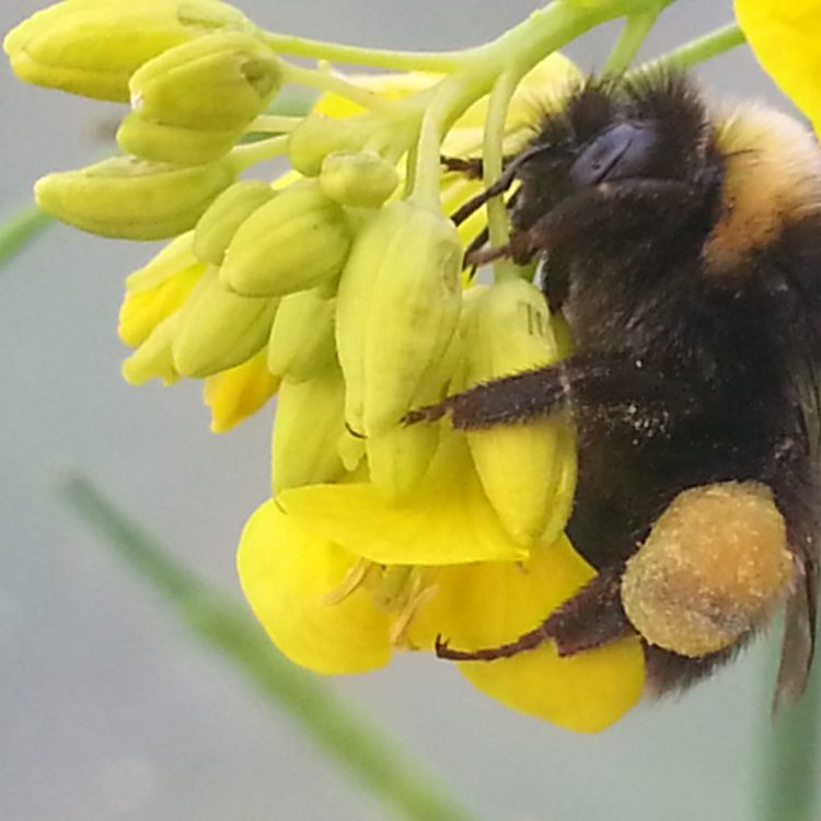 Community Garden, biodiversity & environmental Advice and Consultation from Dee Sewell