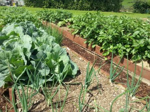 How to involve the community in a community garden