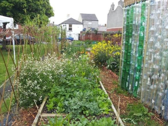 Serenity Community Garden, Dublin - bottle greenhouse