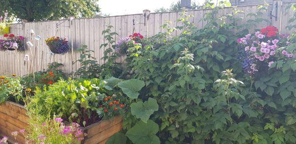 Vegetables for a small garden