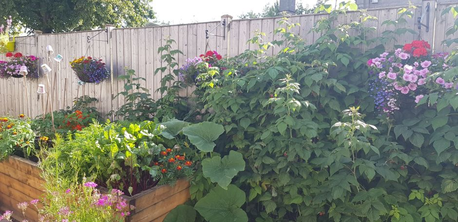 14 vegetables to grow in a small garden