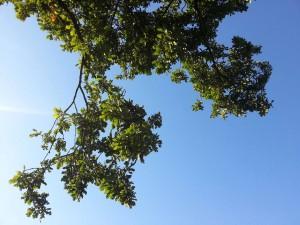 blue skies in Clonegal