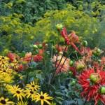 Vibrant Bee Friendly Garden