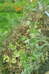 7 jobs for the autumn vegetable garden