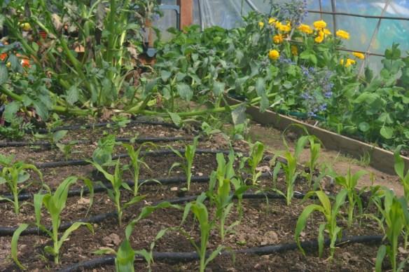 soaker hose irrigation kit
