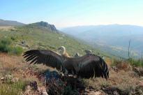 Parque Natural da Serra de São Mamede (Autor: ICNF)