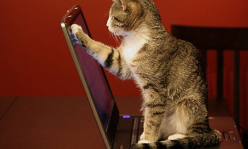 Kitten sits on laptop keyboard and touches screen with paw.