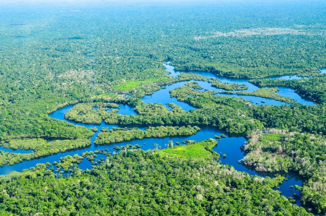 An aerial view of the Amazon rainforest on a sunny day, showing mainly trees and small waterways.
