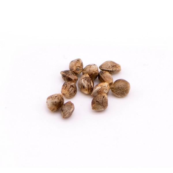 T1 Cherry Seeds