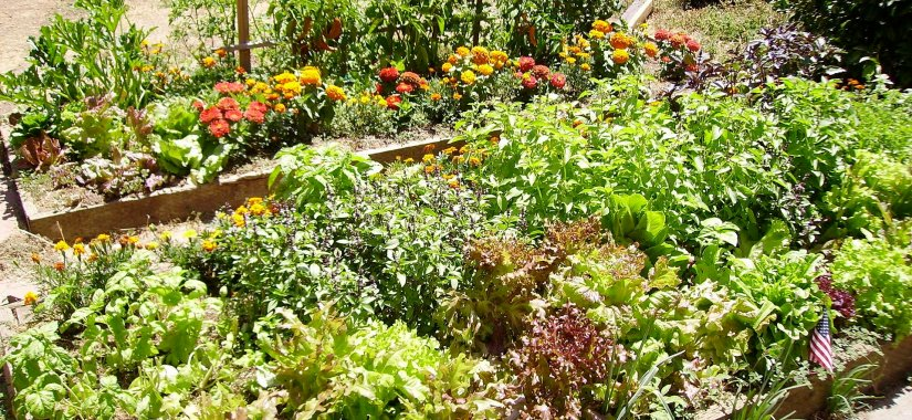 5 ways to improve your backyard