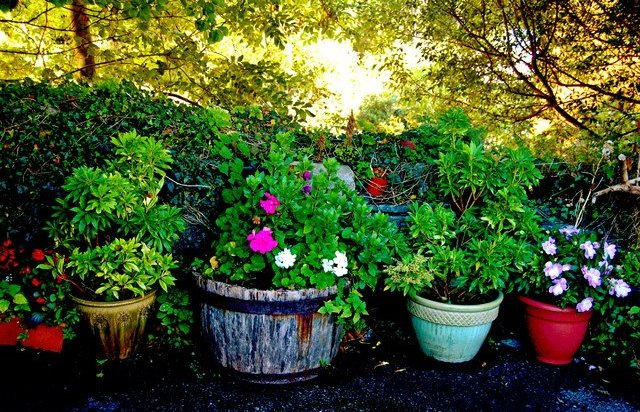 How To Care For Potted Plants